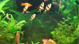 Aquarium HD - Aquarium d