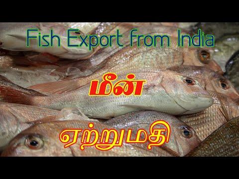 Fish Export Business In India | Shrimp, Fin Fish, Cuttle Fish, Squid | Part-1 | Gokul Export