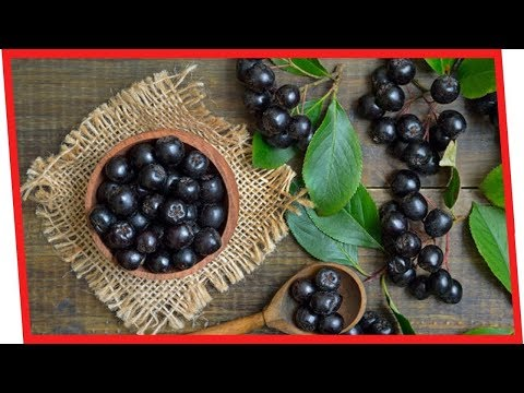 7 Powerful Benefits Of Aronia Berries For Your Health | Nutrition Facts