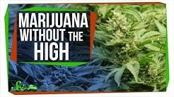 CBD: Marijuana Without the High