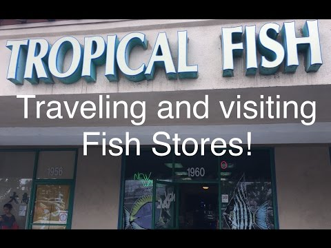 Visiting A Couple Of Fish Stores While Traveling