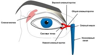 Массаж глаза при непроходимости слезного канала. У Взрослых!