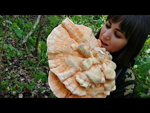 Вопрос: Почему грибы называют лесным мясом?