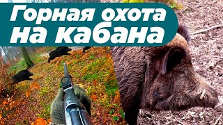 Горная охота на кабана в Казахстане