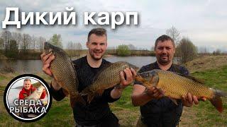 ПОДОБРАЛИ КЛЮЧИК К ВЕСЕННЕМУ КАРПУ Рыбалка весной на закидушки донки в Рязанской области 2021