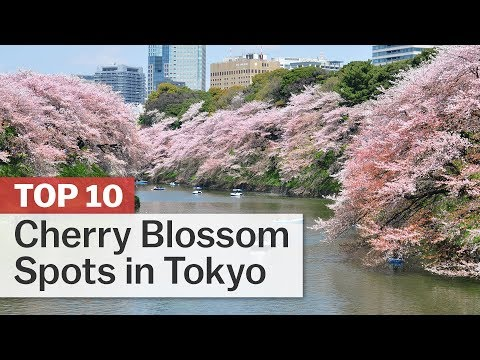 Top 10 Cherry Blossom Spots in Tokyo | japan-guide.com