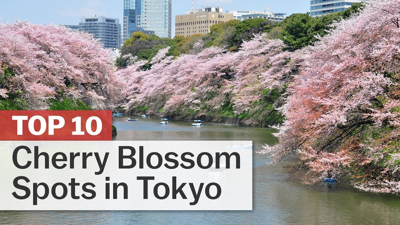 Top 10 Cherry Blossom Spots in...