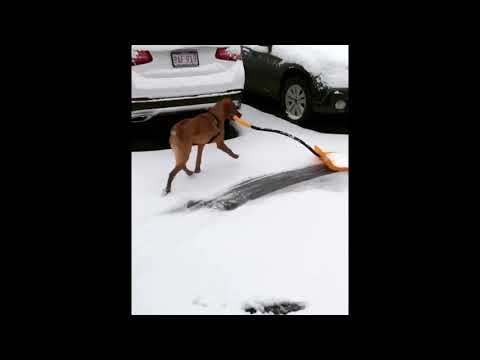 None - We love this snow shoveling dog