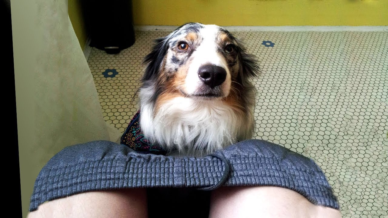 Why Dogs Follow You Into The Bathroom Other Strange Behaviors