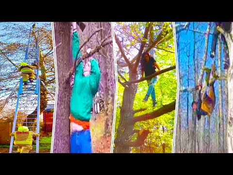 Funniest Tree Climbing Fails