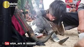 Maheso Suryo Joyo live Jedong Wagir Malang