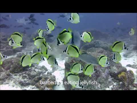 Galapagos 2016 Youtube