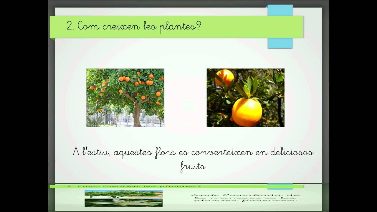 Com creixen les plantes youtube for Les plantes
