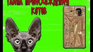 Тайна происхождения котов