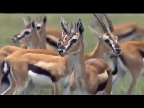 Вопрос: Иногда, смотрю видео, про борьбу животных в дикой природе.Это нормально?