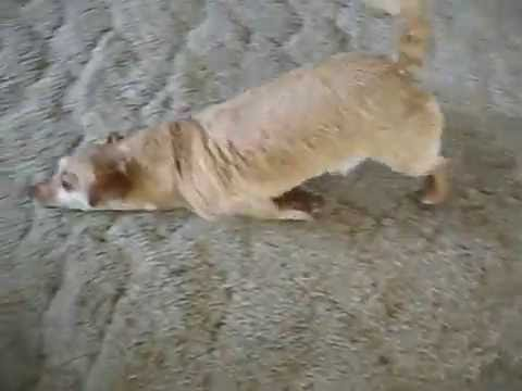 TRY NOT TO LAUGH - FUNNY DOG TRYING TO DRY HIMSELF AFTER BATH / CUTE AND FUNNY PET COMPILATION