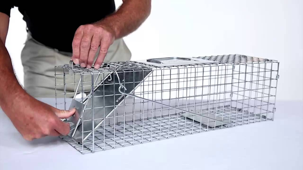 how to build a skunk trap