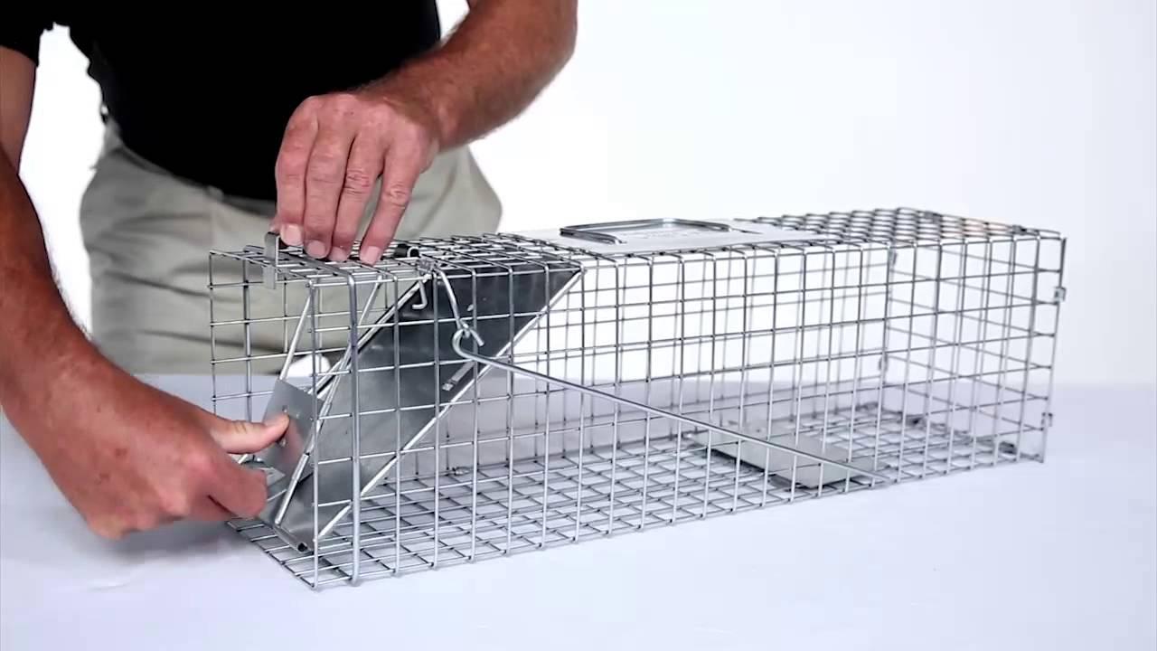 How to Set Havahart Medium 1Door Trap Model 1078 for Skunks Rabbits  Squirrels  YouTube