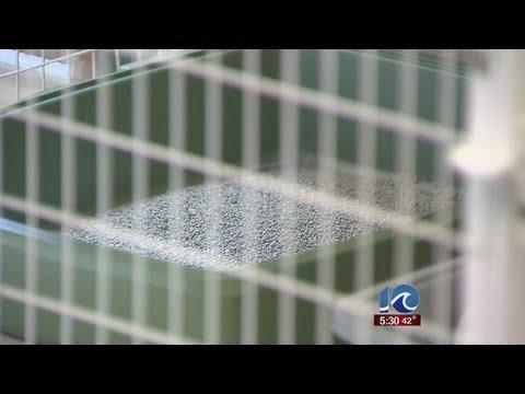 Dozens of cats found in Pasquotank County
