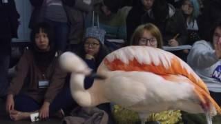 Animation students draw Columbus Zoo animals