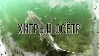 Рыбалка на щуку монстра трофейная щука на спиннинг