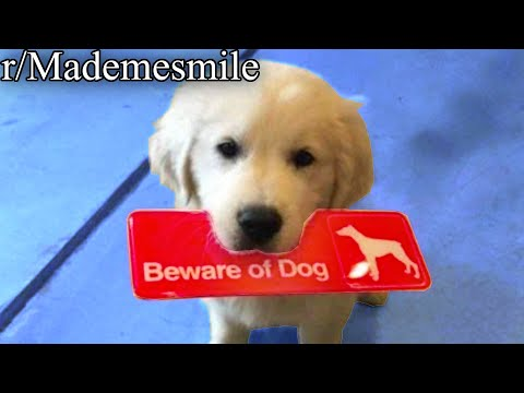 r/Mademesmile | CUTE VIDEO FT. SCARY DOG