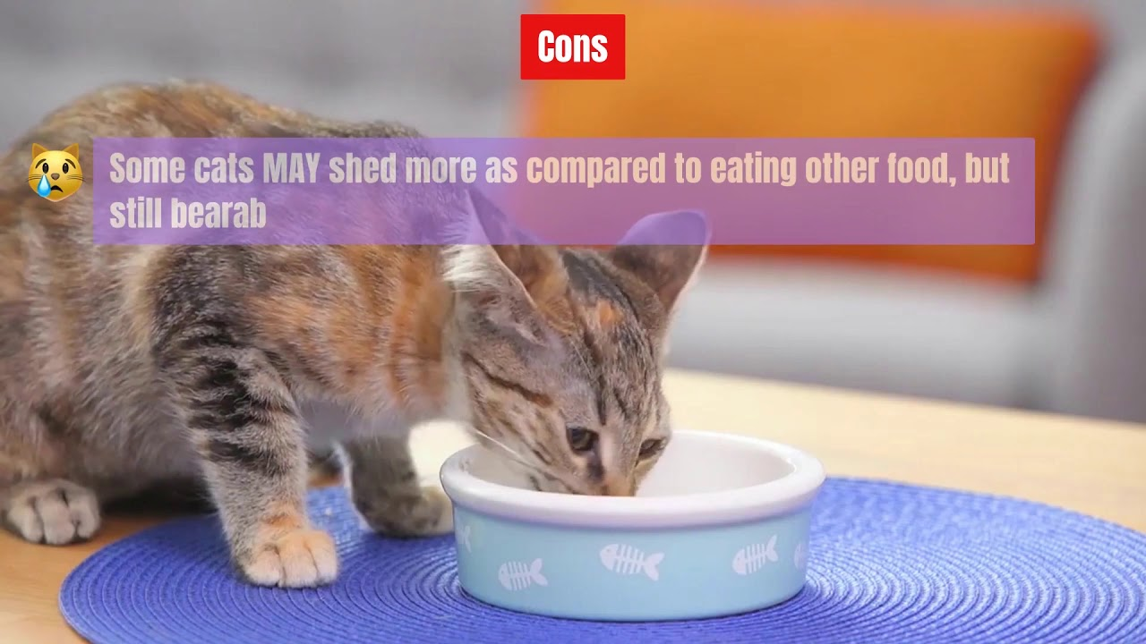 Best Cat Food For Diarrhea – A Careful Cat Owner's Guide