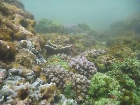 Sri Lanka,ශ්රී ලංකා,Ceylon,Coral Reef (09)