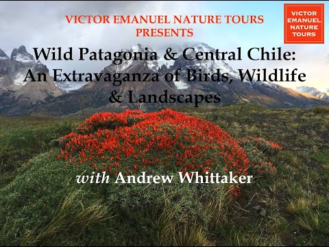 WILD PATAGONIA & CENTRAL CHILE: AN EXTRAVAGANZA OF BIRDS, WILDLIFE & LANDSCAPES