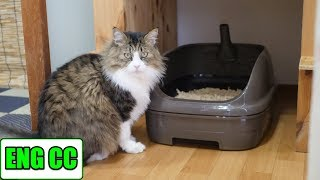 Installing System Toilet in Boss Cat Room【Eng CC】