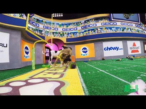 Puppy Bowl XIV's Winning Touchdown
