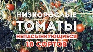 Низкорослые сорта томатов в 2018! Мой обзор урожая