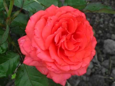 фото розы фройде