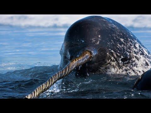 48 Gambar Hewan Purba Laut Terbaru