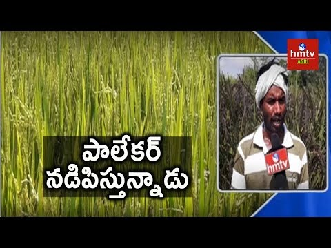 Desi Paddy Cultivation In Palekar Method | Natural Farming | hmtv Agri