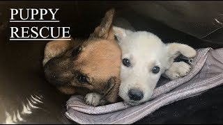How we rescued two puppies from Tajikistan