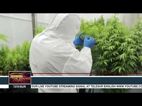 Trinidad and Tobago Holding Strong on Marijuana