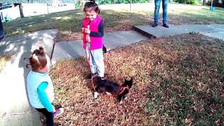 Первая прогулка нашей Кошки-Ненси.