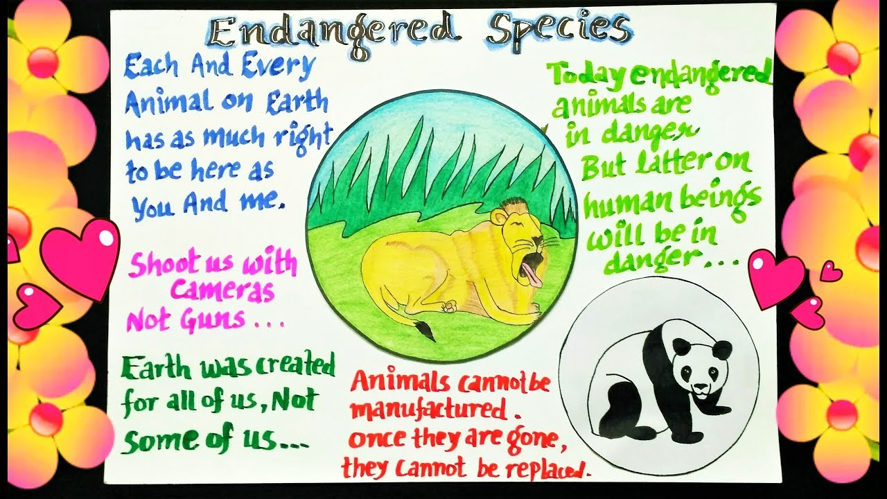 endangered animals poster poster