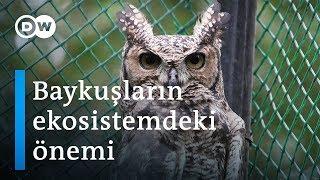 Kenya'da baykuşların 'uğursuzluk' imajıyla mücadele - DW Türkçe