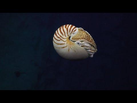 Visioning the Coral Sea Marine Park - ROV Highlights - FK200429
