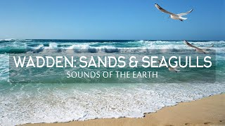 Sounds of the Earth - Wadden: Sands and Seagulls