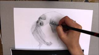 Speed Drawing - Cavalier King Charles Spaniel