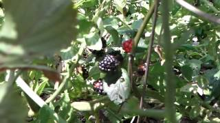 Florida Food Forest Garden - Permaculture