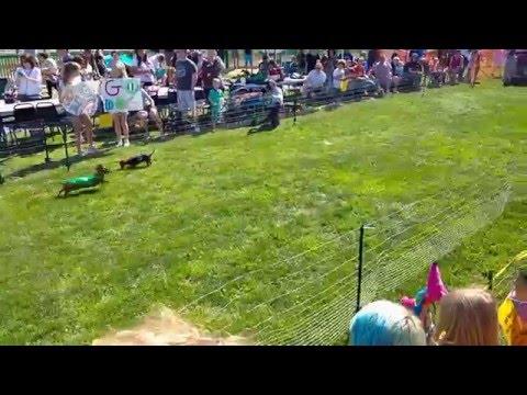 Turf Paradise Wiener Mania 2016