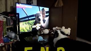紀州犬の赤ちゃん~1ヶ月の映像です(^o^)