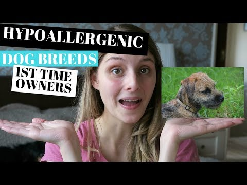 HYPOALLERGENIC DOGS BREEDS - FOR FIRST TIME OWNERS
