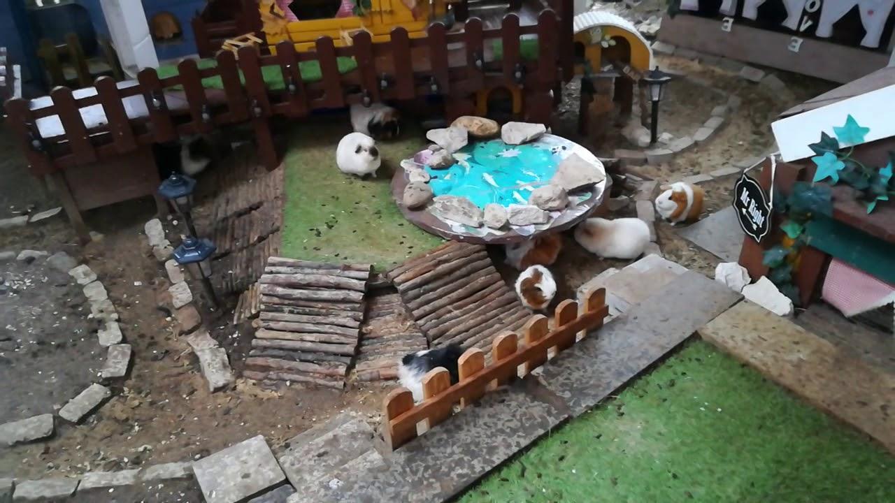 Sturm Sabine und die Meerschweinchen