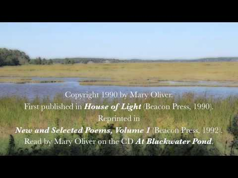 "Mary Oliver reads ""The Summer Day"" (aka ""The Grasshopper"")"