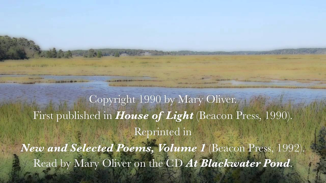 """Mary Oliver Love Quotes Mary Oliver Reads """"the Summer Day"""" Aka """"the Grasshopper""""  Youtube"""